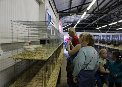 Chickens at Dixie Classic Fair